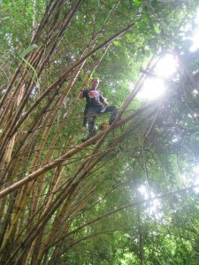 Justin in the bamboo